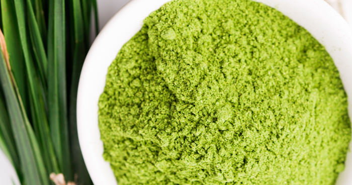 Was Ist Chlorophyll